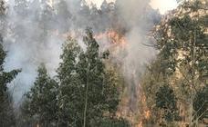 Incendios en La Cavada y Vega de Pas este viernes