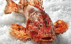 Cabracho, un pescado tan sabroso como lleno de espinas