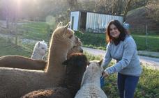 Las alpacas, un 'plan b' en Llanos