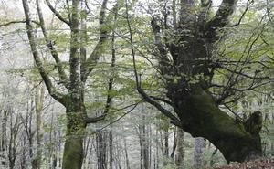 Árboles mágicos y sanadores en el Fluviarium de Liérganes