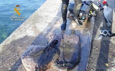 Sorprendido un mariscador en el dique de Gamazo con 35 kilos de anémonas