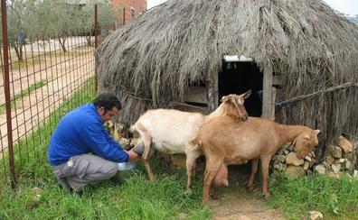 Los últimos cabreros de Cantabria