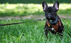 ¿Mejor collar o arnés para nuestro perro?