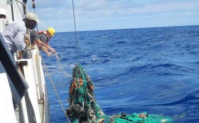 El 99% de las aves marinas tendrán plásticos en su organismo en 2050
