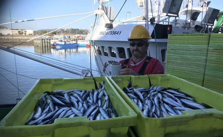 Descarga de los primeros bocartes en el puerto de Santoña