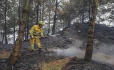 Un bosque maduro tarda 150 años en regenerarse tras un incendio