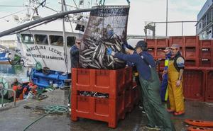 «Somos pescadores de verdel, no depredadores»