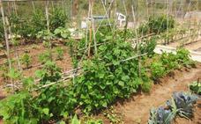 Qué plantar en la huerta a principios de primavera