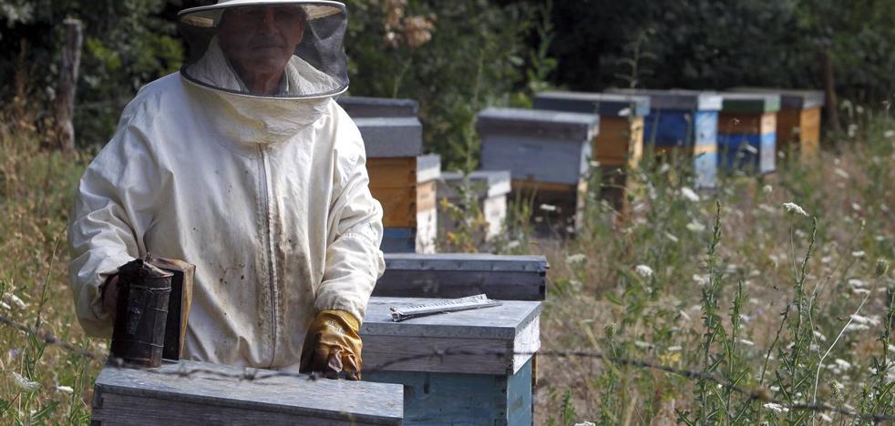 Medio Rural repartirá 64.000 euros de ayudas para mejorar la producción y comercialización de la miel