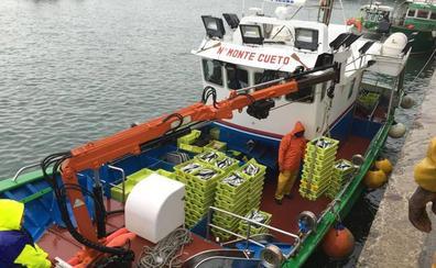 Los cerqueros cántabros finalizan su cupo de verdel en «cuatro días» de costera
