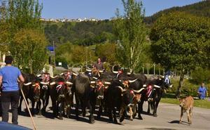 El Ayuntamiento recupera la feria de ganado de Unquera