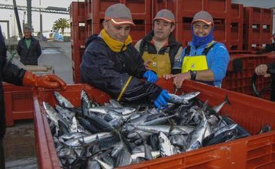 Los pescadores dan por terminado su cupo de verdel en cuatro días de costera