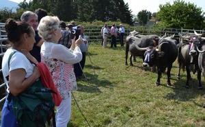 Molledo dobla las hectáreas de pastos comunales para sus ganaderos