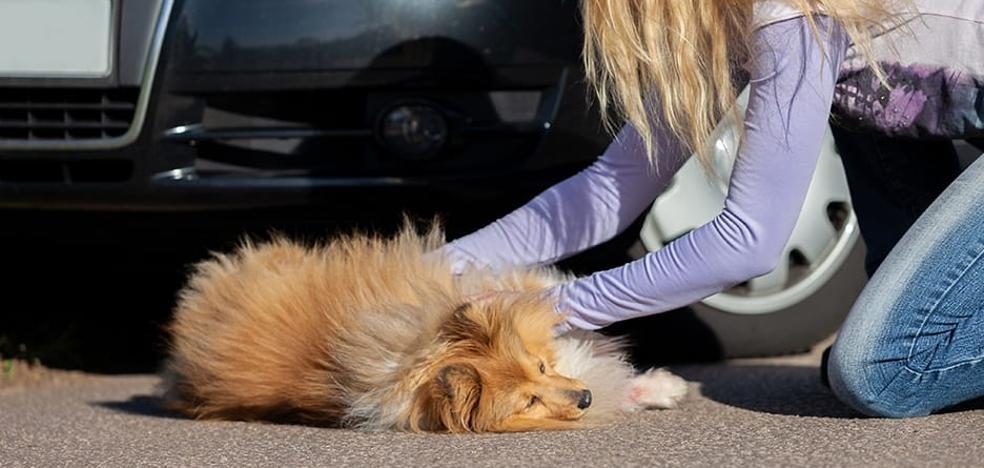 ¿Cómo realizar una reanimación cardiopulmonar a nuestra mascota?