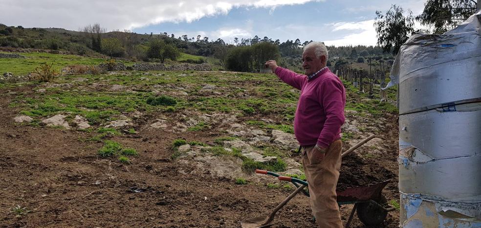 Los lobos matan varias ovejas junto al pueblo de San Pedro de las Baheras
