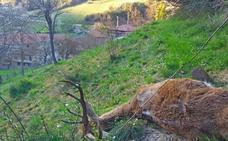 Un brote de sarna infecta a animales domésticos y a varios vecinos en Liébana