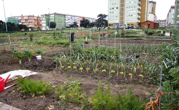 Los huertos urbanos de Torrelavega inician la temporada de siembra entre maleza y basura