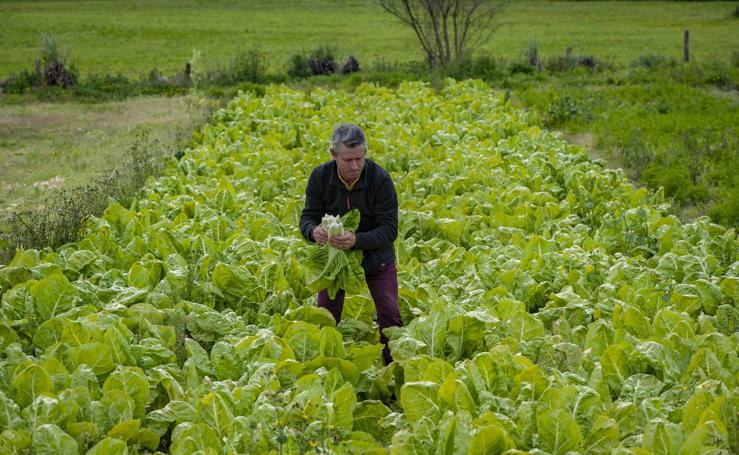 El sector agrícola, contento con la lluvia