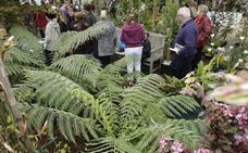 Una treintena de expositores participará en una nueva edición de la Feria de Árboles y Plantas