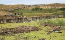 El Gobierno regional eliminará las antiguas depuradoras de Somo y Loredo