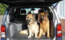 La forma correcta de viajar con mascotas en el coche