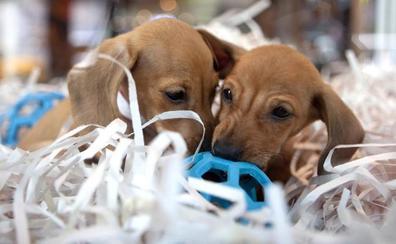 A mordiscos por el creciente mercado de las mascotas