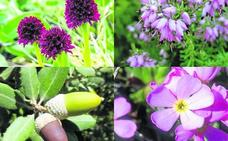 Una joya botánica