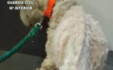 Investigan a un hombre por tener a su perro en tal estado de desnutrición que «le impedía mantenerse de pie»