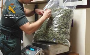 Desmantelada una plantación de marihuana en Ajo con más de 7,5 kilos de género