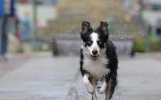 El rescate viral de un perro a otro de un inminente atropello