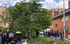 Un árbol cae sobre un coche y corta la calle Honduras durante la Feria de Abril de Santander