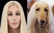 Cuando las mascotas se parecen a sus dueños