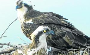 'Txuriko' y 'Vanda' vuelven a la bahía