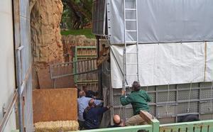 Llegan a Cabárceno las otras dos jirafas procedentes de Valencia