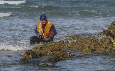 «Piden requisitos absurdos para pescar erizos y anémonas»