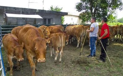 La mitad de los ganaderos cántabros, a un paso de la jubilación