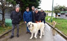 Zuloaga se compromete con el 'sacrificio cero' de animales la próxima legislatura