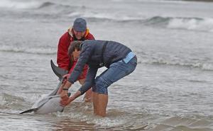 «Me quedo con que logramos salvar a tres delfines, no con que murieron 14»