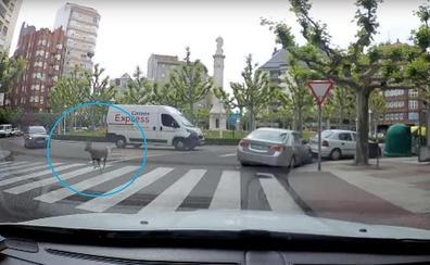 Un corzo 'asalta' el centro de León