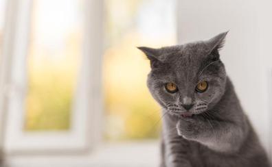 Descubre todo lo que tu gato quiere decirte