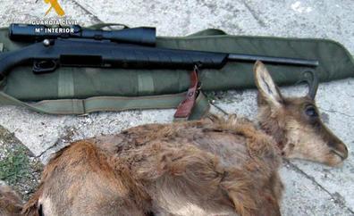 La Guardia Civil investiga a cuatro furtivos por cazar dos rebecos en el Parque Nacional de Picos de Europa