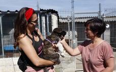 Un centenar de perros en busca de familia