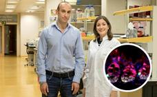 Descubierta una nueva protección frente a los efectos secundarios de la radioterapia