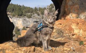 Socio, el gato que viaja en caravana por Cantabria
