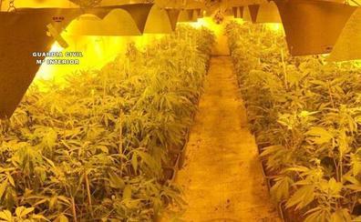 Descubren en Riotuerto una plantación de marihuana con importantes medidas de seguridad montada por un club cannábico de Santander