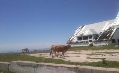 El Picón Blanco, nieve, vacas y bicis