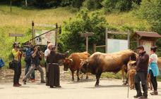 Bendición del ganado en el monasterio de Santo Toribio