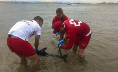 «Enviaron a la cría de delfín a una muerte segura»