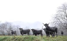 Los retos de gestión de la ganadería de montaña, a debate este viernes en Potes