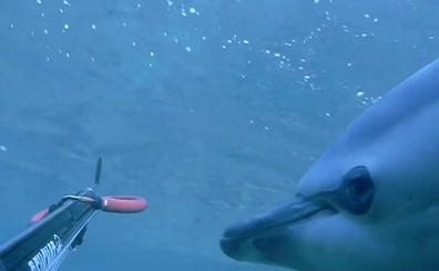Un pescador ayuda a salir a un delfín despistado en aguas de Loredo